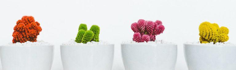 Tres casos de emprendimiento surgidos del Máster en Marketing Digital